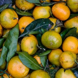Fresh tangerine fruits for sale at local market in Moscow, Russia.