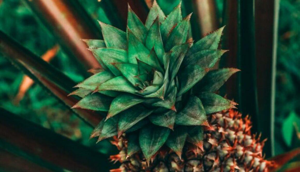 agave-blur-cactus-2868966